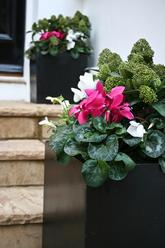 Seasonal.flowers.polystone.planters.london