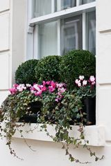 window boxes london