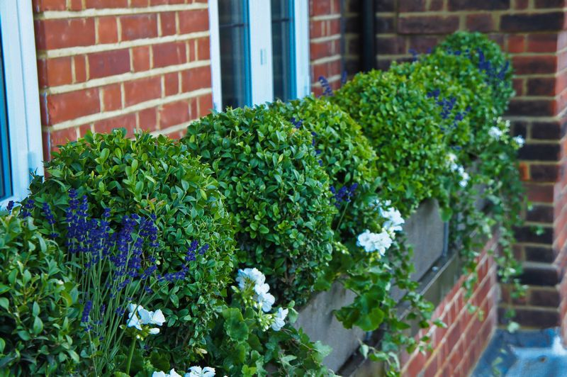 Window Box Company Window Boxes London Metal Window